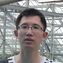 Ling mentor, Ling expert, Ling code help