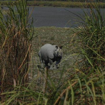 Kaziranga National Park & Guwahati (4 Days)