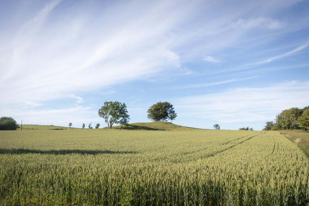 Field outside Torekov