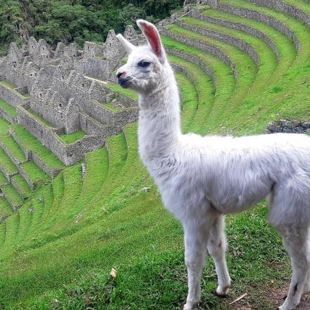Inca Trail 2 Days to Machu Picchu