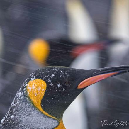 South Georgia & Falklands Photographic Expedition