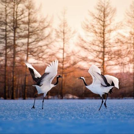 Hokkaido Winter tour: Lake Akan to Shiretoko
