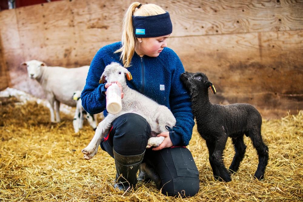 Fanny på JGY Torsta ansvarar till viss del över lamningen på Torsta som en del i sin utbildning på inriktningen lantbruk djur.  Bilden får endast användas i samband med publicering av reportaget om Fanny. Foto: Robert Henriksson / Torsta