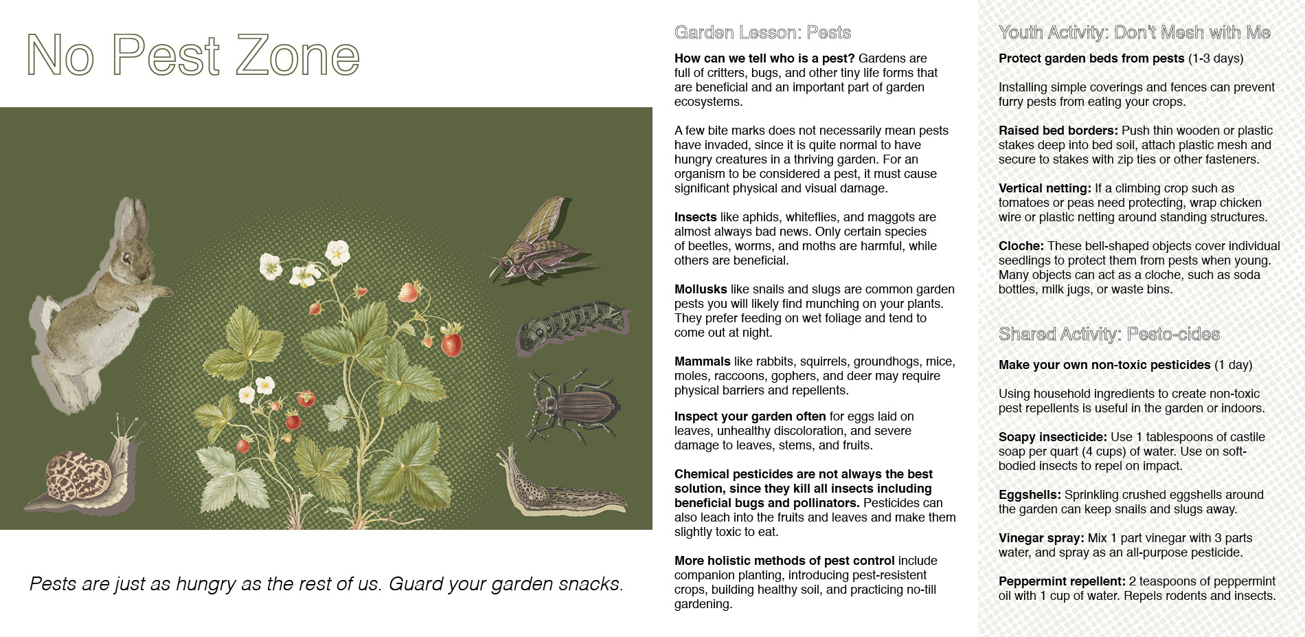 No Pest Zone: Identifying and Managing Garden Pests