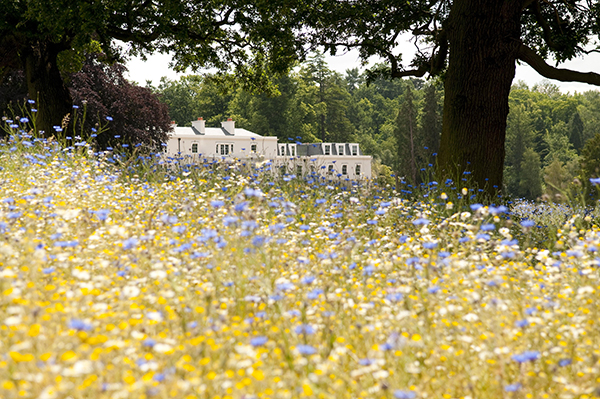meadow-exterior-back-coworth-park-high-res-landscape