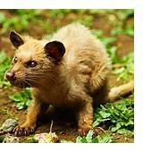 Author: Tigrou Meow