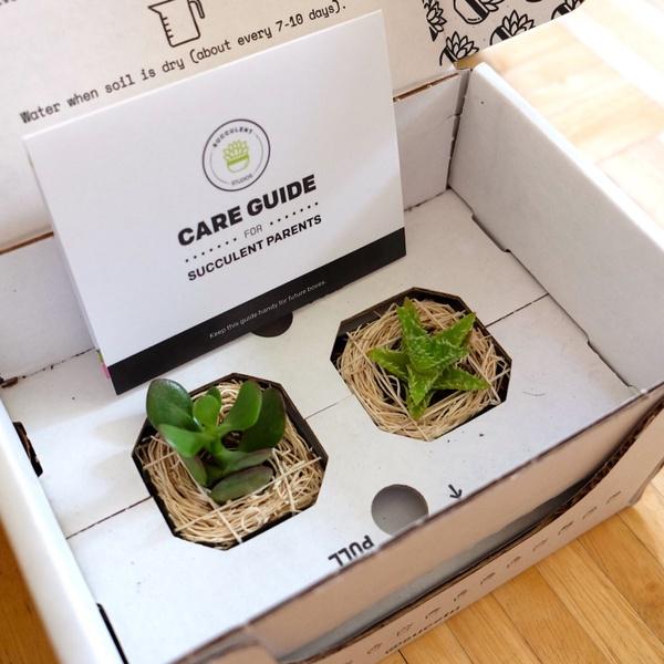 September Succulent Box