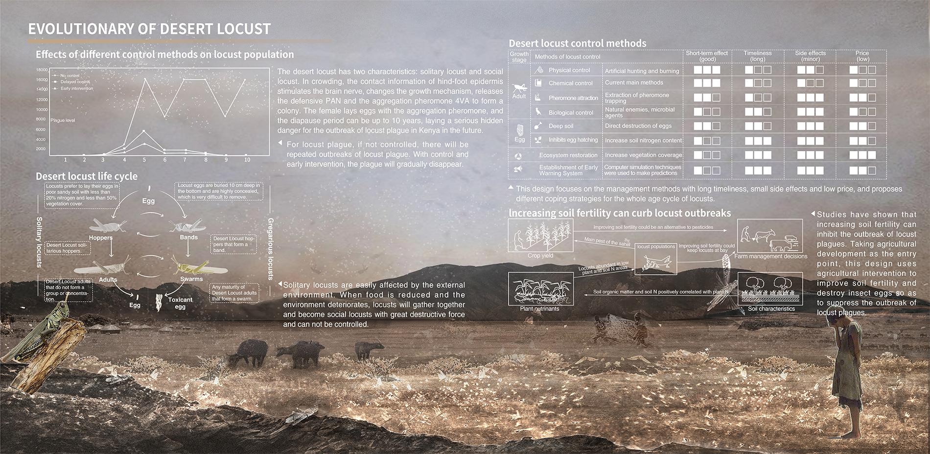 EVOLUTIONARY OF DESERT LOCUST