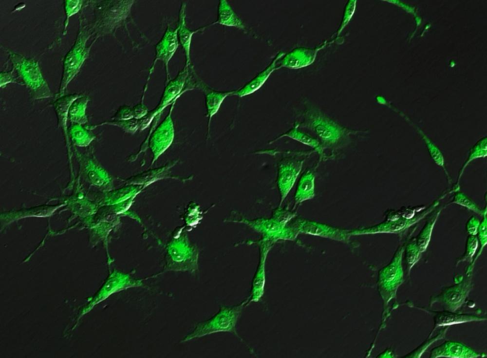 Celluminova celler