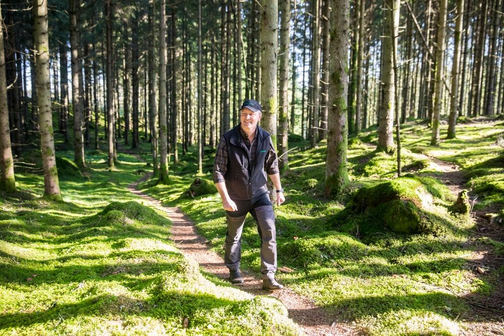 Skog virkesinköpare Derome