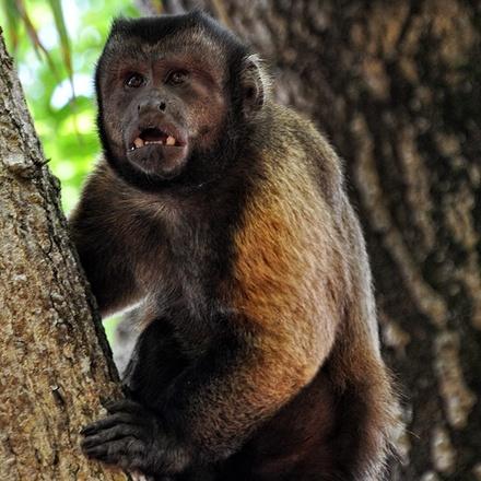 South America's Forgotten Corner - Guyana, Suriname, French Guiana
