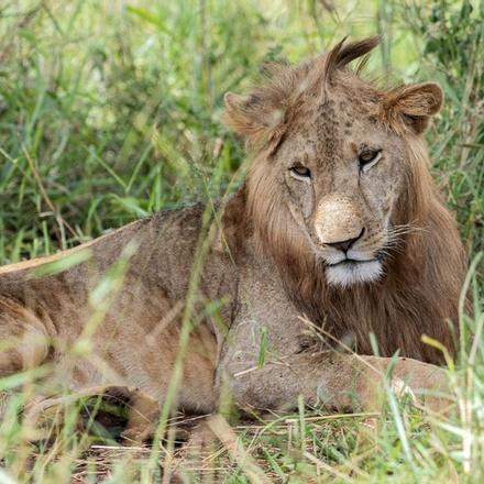 5-Days Ziwa Rhino, Kidepo Valley & Murchison Falls National Parks Safari - Luxury