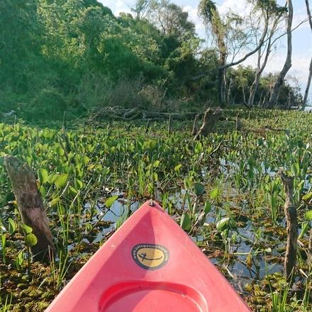 Discovering the East in 9 days - Iguassu Falls & Ibera Wetlands