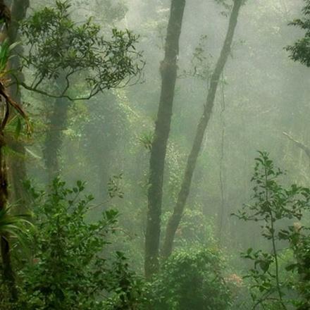 Wild Sarawak