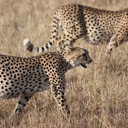 Battlefields Route & Midlands Meander, Kwazulu-Natal Drakensberg, South Africa