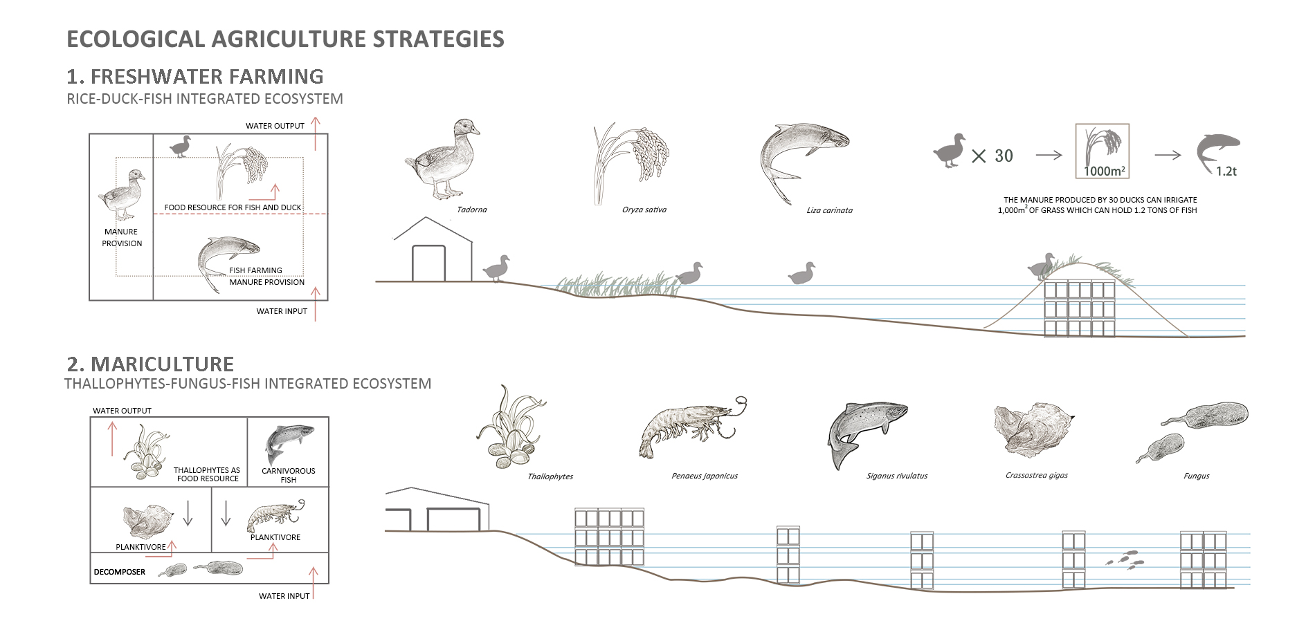 Ecological Agriculture Strategies