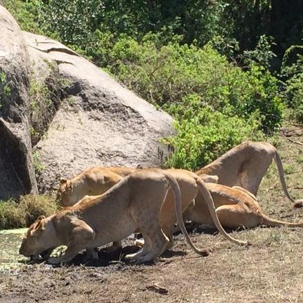 CLASSIC TANZANIA WILDLIFE SAFARI