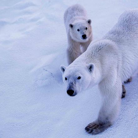 Manitoba: Polar Bear Adventure