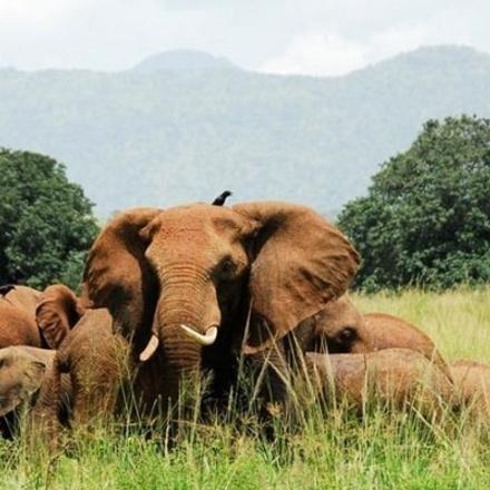 3-Days Kidepo Valley National Park Adventure - Budget Safari