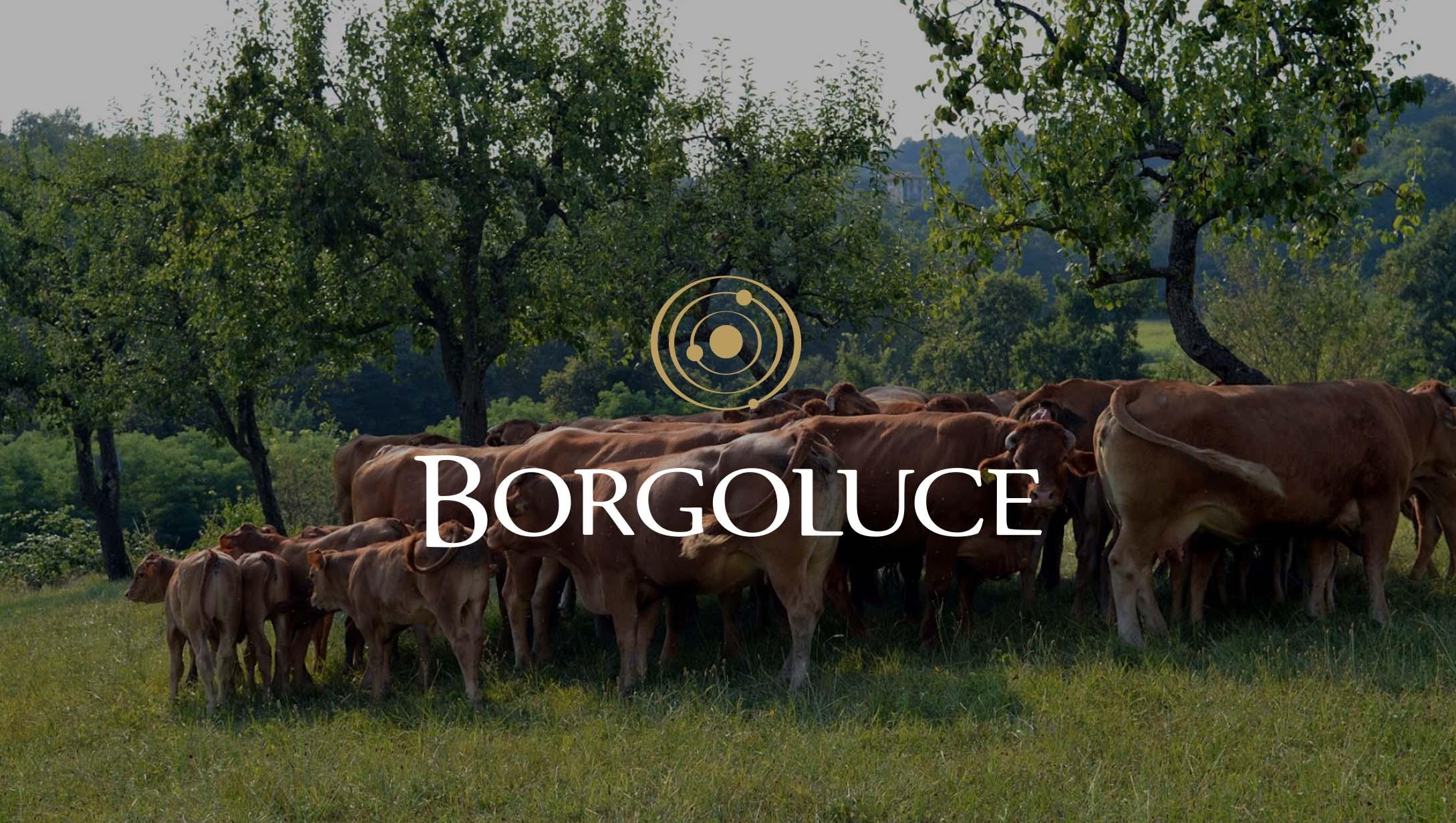 Borgoluce