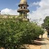 Garden area and minaret, Tomb of Job, Salalah, Oman, 2016. Photo courtesy Murray Meltzer.