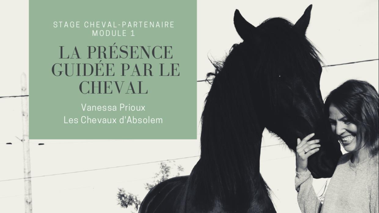 Représentation de la formation : Cheval-partenaire : la présence guidée par le cheval