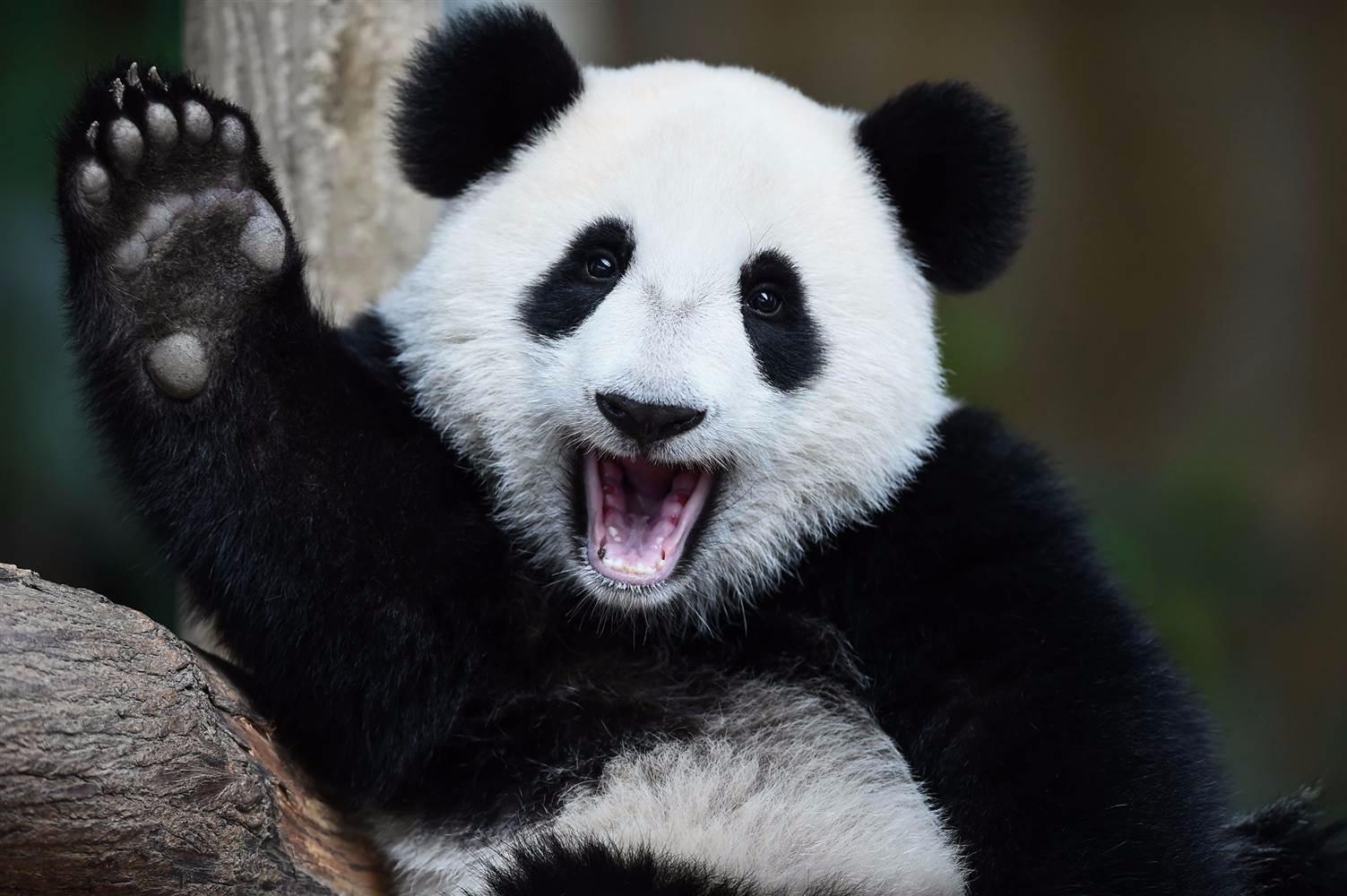 pandas read json