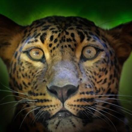 Exploring Leopard's with Wild Bush Camping in Sri Lanka