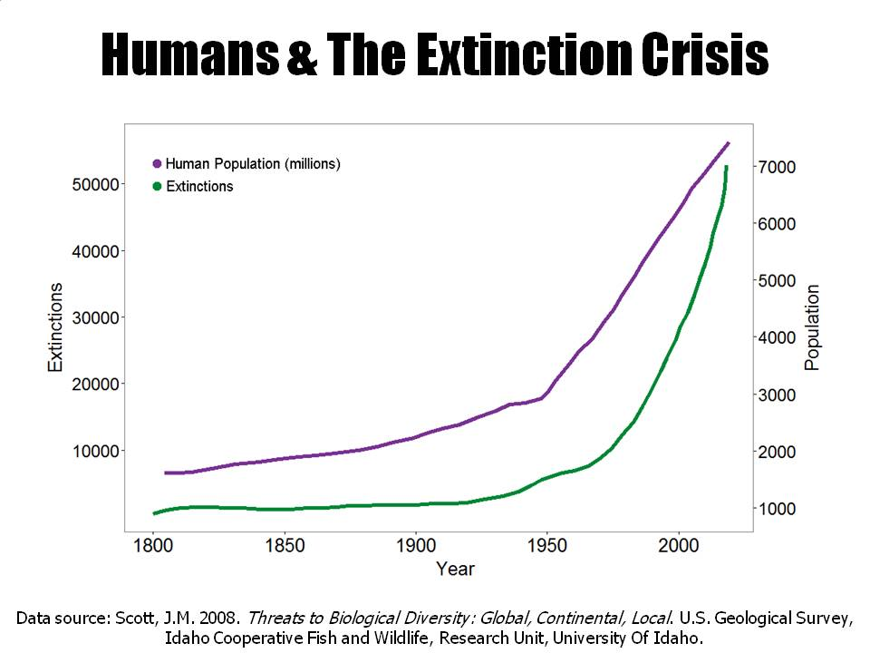 Graph depicting humans and the extinction rate