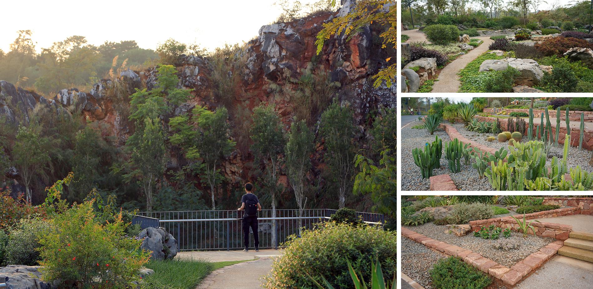 A Rock Garden Showcasing the Biodiversity (Quarry No. 3)