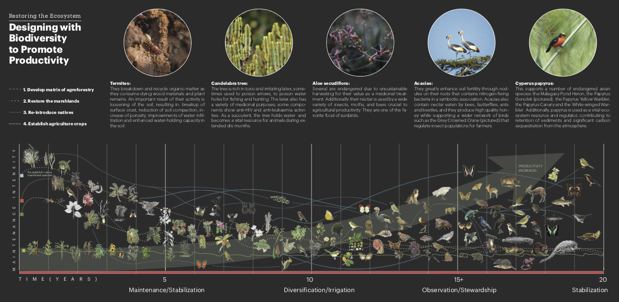 Designing with biodiversity to promote productivity