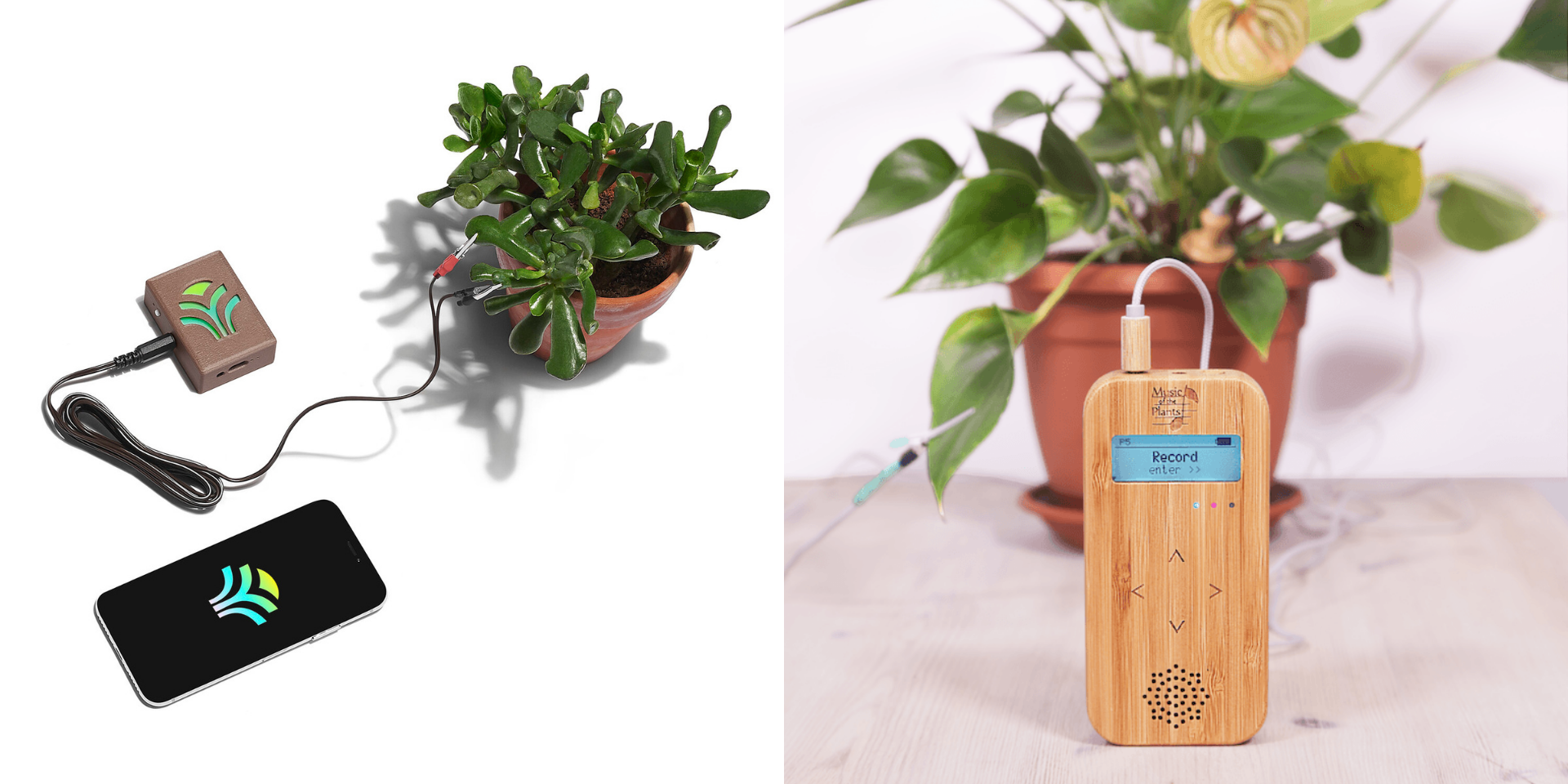 Tune in to nature by listening to music generated from your plants
