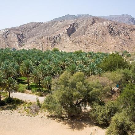 Self-Drive Through the Wonders of Oman