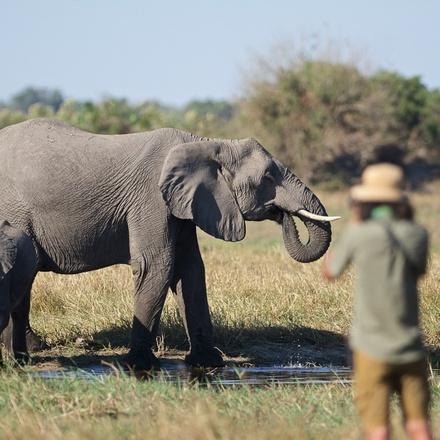 Botswana - Okavango Through the Lens