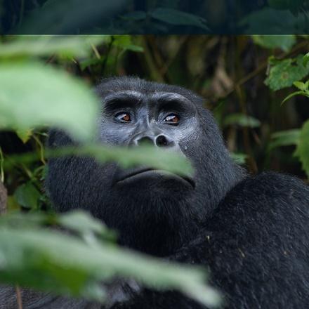 3-Day Mountain Gorillas & Batwa Community Visit Safari - Budget
