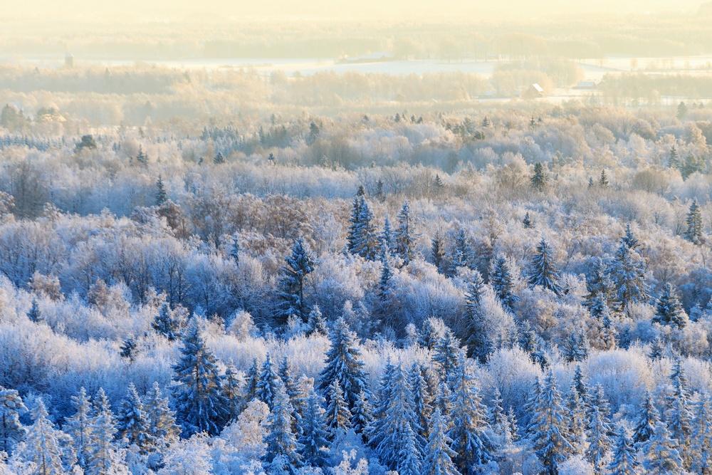 Vintervy över skog. Foto: Mostphotos