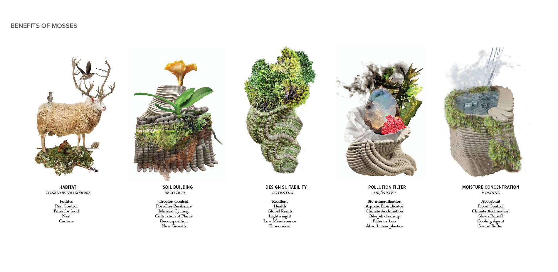 Benefits of Mosses