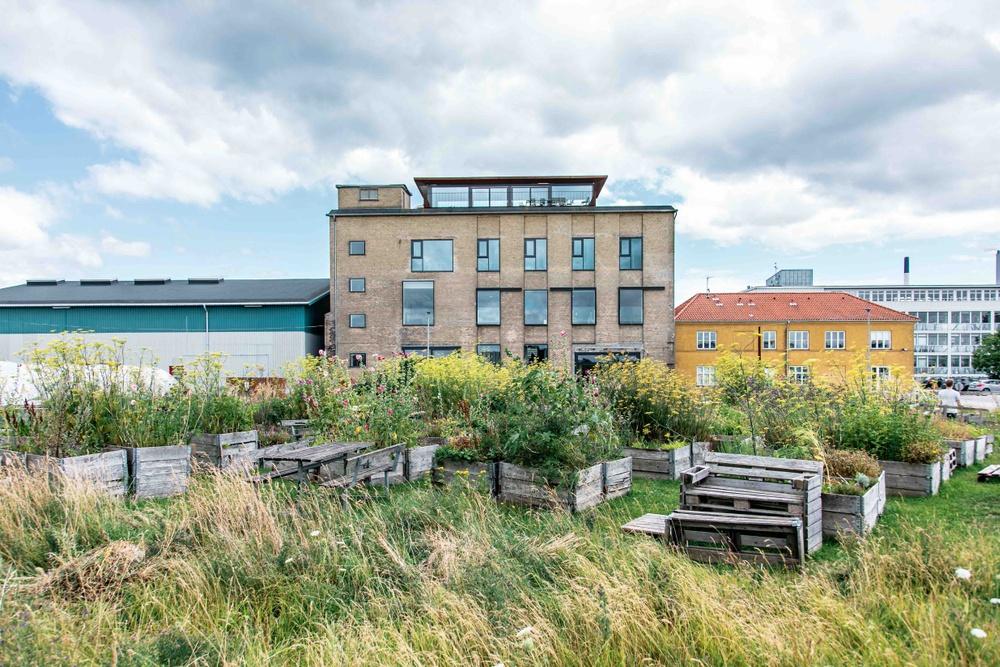 Amass Restaurant, Copenhagen. The winner 360°Eat Guide 2020. Photo: Christian Bach