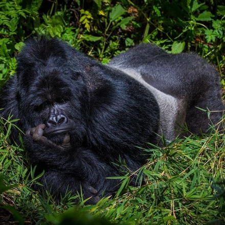 10-Days Mountain Gorillas, Chimpanzees, Zebras & Uganda Wildlife Adventure - Mid-range Safari