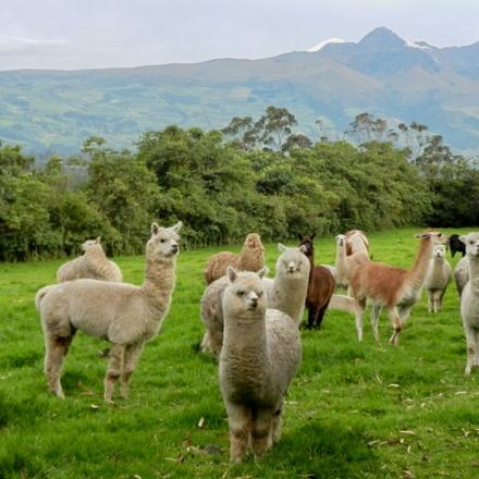 Ecuador Volcano and Jungle Adventure