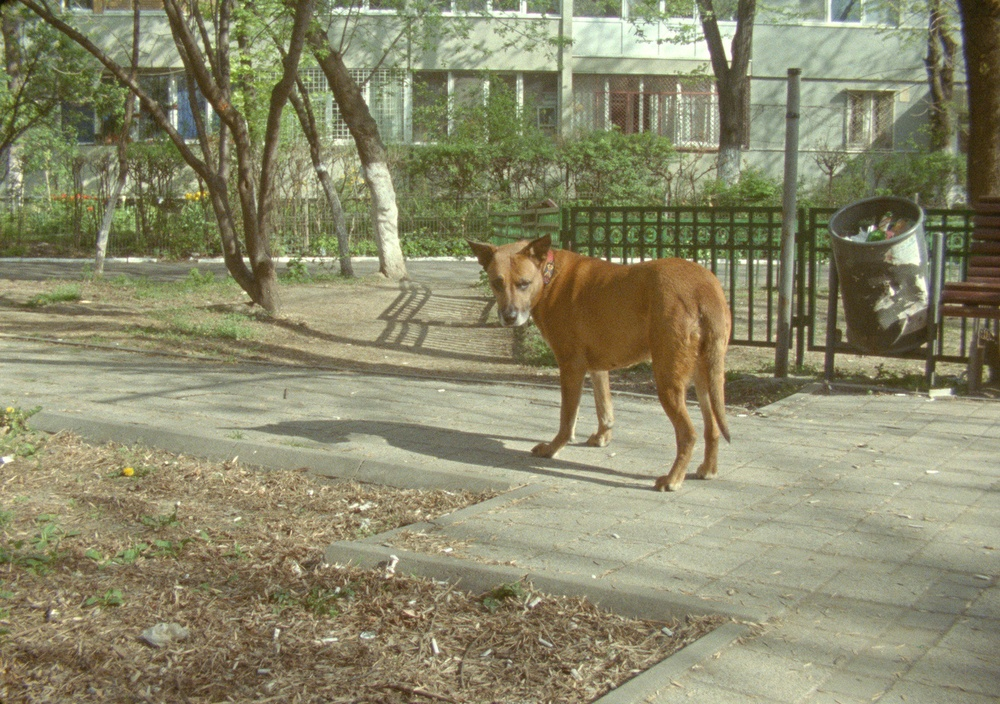 From the film: The Dogs of Sector X © Nanna Debois Buhl