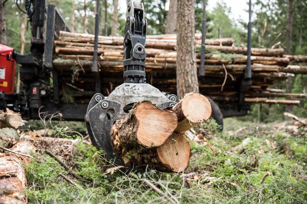 Skog gallrning Derome