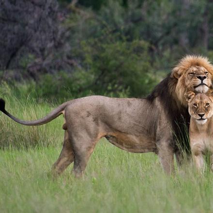 3-Day Murchison Falls National Park Experience - Luxury Safari