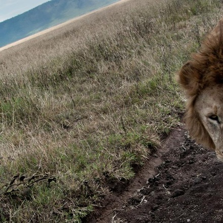 Tanzania to Zanzibar: White Sands & the Wilderness