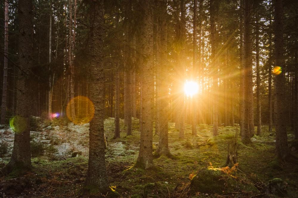 Dala Energi installs new application from Dlaboratory Sweden