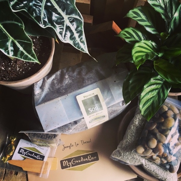 """My DIY Garden - """"Jungle In There"""" - Tropical Houseplants"""