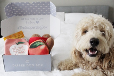 The Dapper Dog Box Photo 1