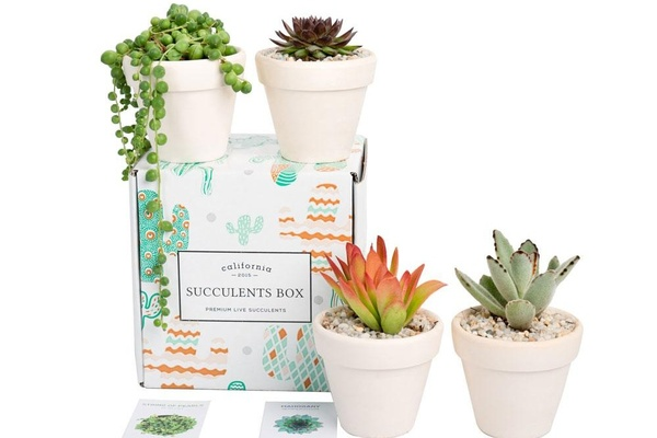 Succulents Box - Monthly Subscription Box with four white pots and succulents with 2 information cards