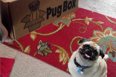 Pug Box Photo 2