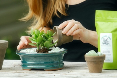 A woman pouring water into a potted succulent plant.